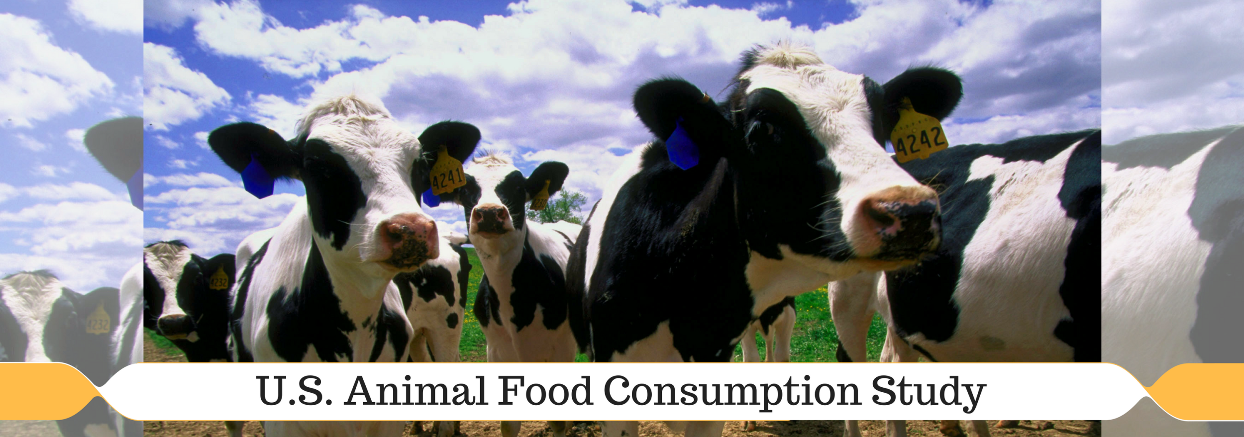 U.S Animal Food Consumption